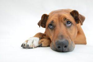 Fake-News: Hundebordell für Zoophile
