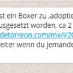 WhatsApp-Kettenbrief: ausgesetzter weißer Boxer mit braunen flecken