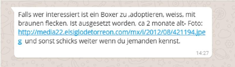 WhatsApp-Kettenbrief: ausgesetzter Boxer