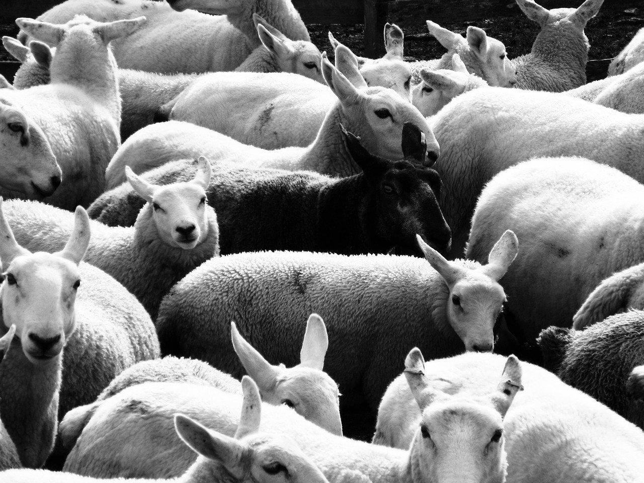 Schwarze Schafe unter den Online Casinos